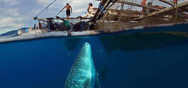 Oslob Whale Shark Encounter Guidelines