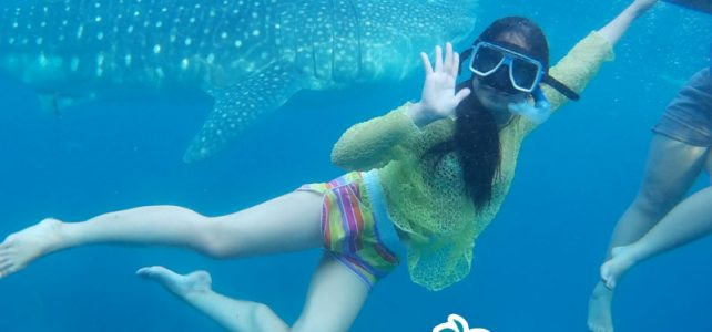 Oslob whale tour, Sumilon Island and Kawasan Falls Canyoneering tour package