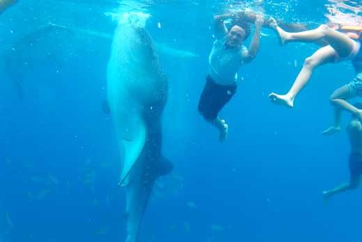 Oslob Whale Tumalog Kawasan Falls