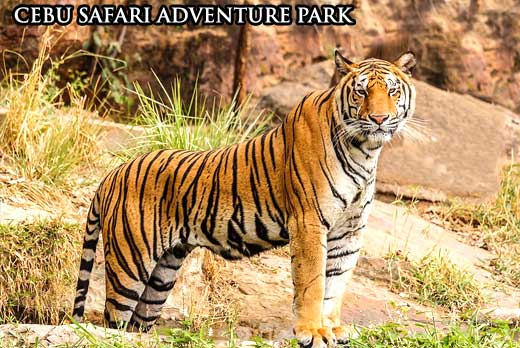 cebu safari adventure park