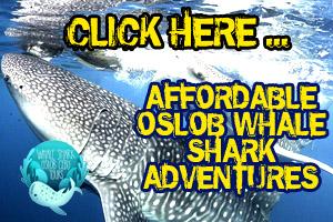 Affordable Oslob whale shark tours.