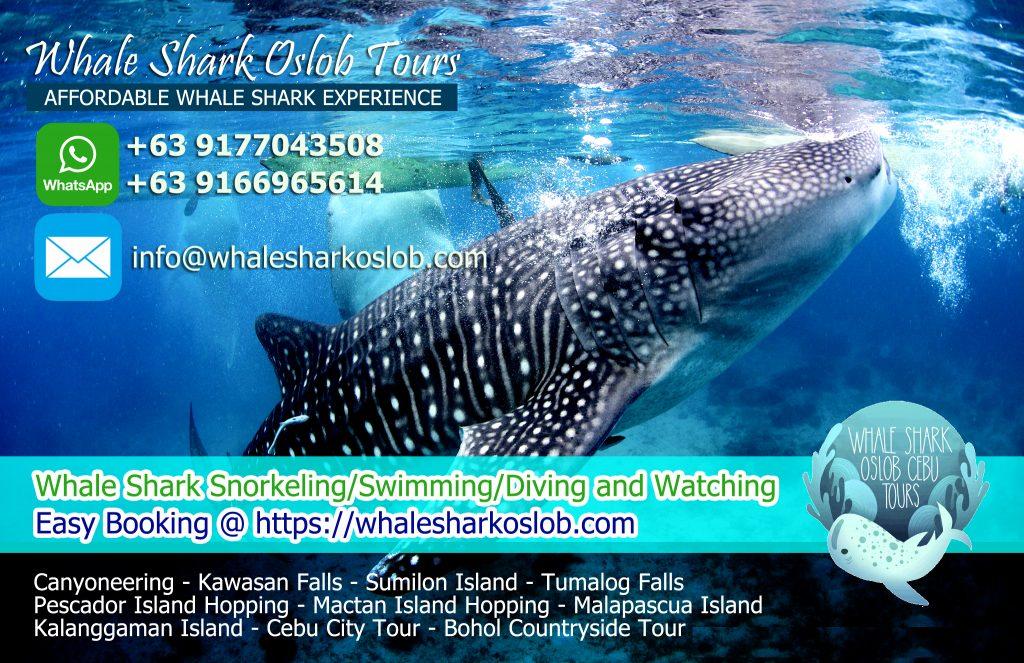 whale shark oslob
